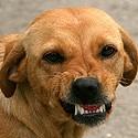 Nervosité Agitation, Stress chien.