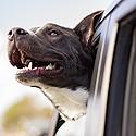 Voyage, Transport chien.
