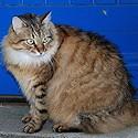 Perte de poids, Embonpoint chat.
