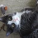 Le Chat hyperactif.