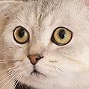 Le Chat dépressif.