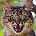 Le Chat peureux.