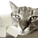 Diabète du chat.